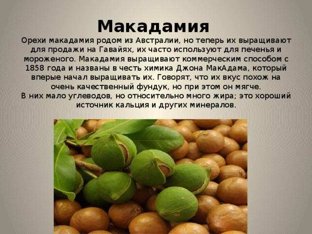 Польза и вред ореха макадамия для мужчин