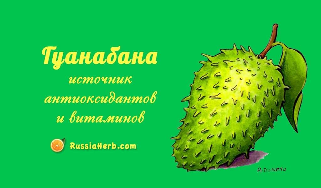 10 польза фрукта гуанабана (сметанное яблоко) для лечения рака
