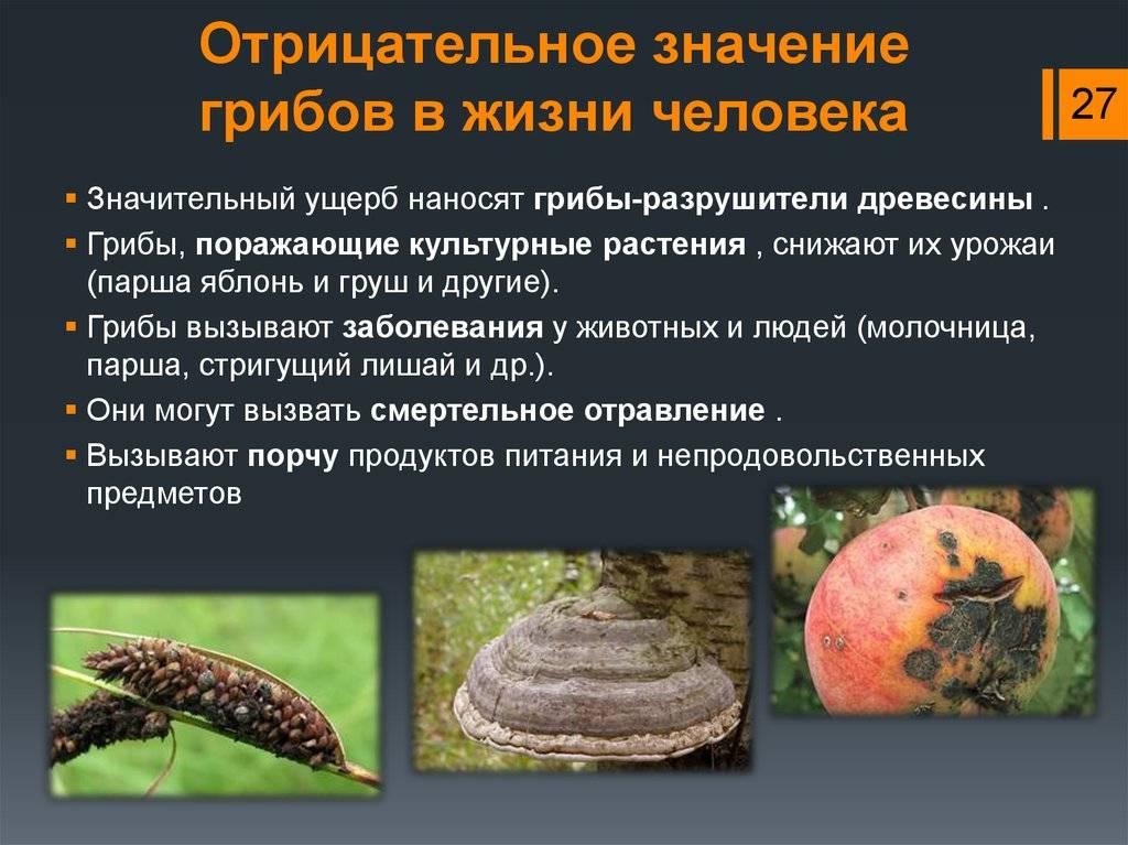 Признаки грибка в организме и его лечение