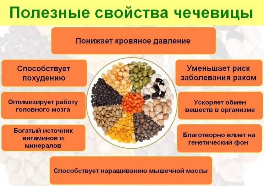 Горох – польза и вред овоща для организма человека