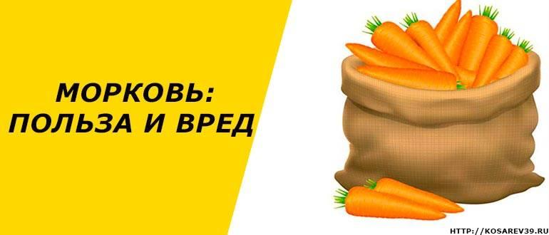 Польза и вред моркови для организма человека, противопоказания