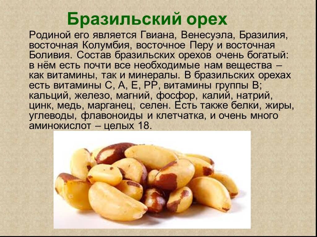 Польза бразильского ореха для организма женщины