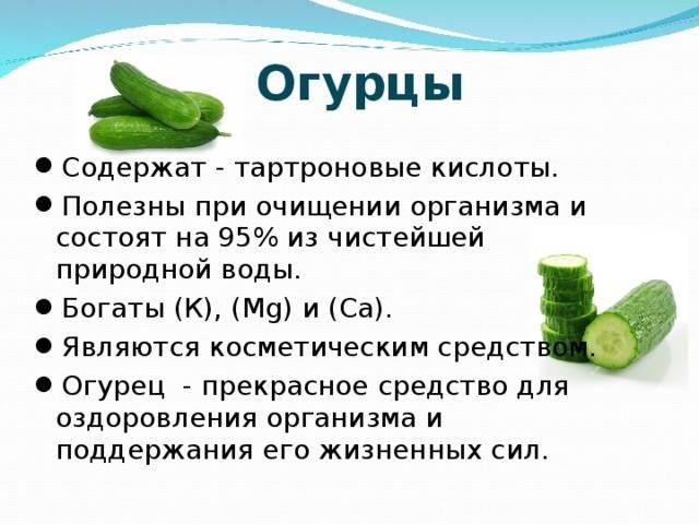 Огурцы, их польза и вред для здоровья