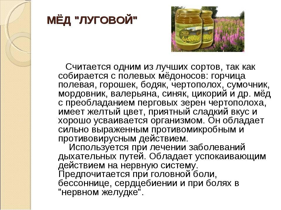 Донниковый мед полезные свойства и противопоказания