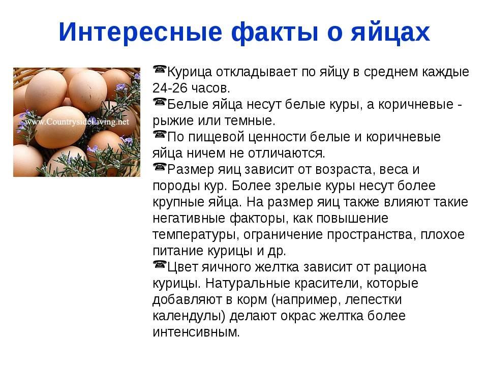 Польза яиц при беременности