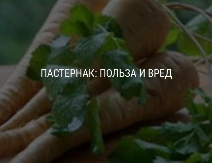 Овощ пастернак — польза, лечение пастернаком