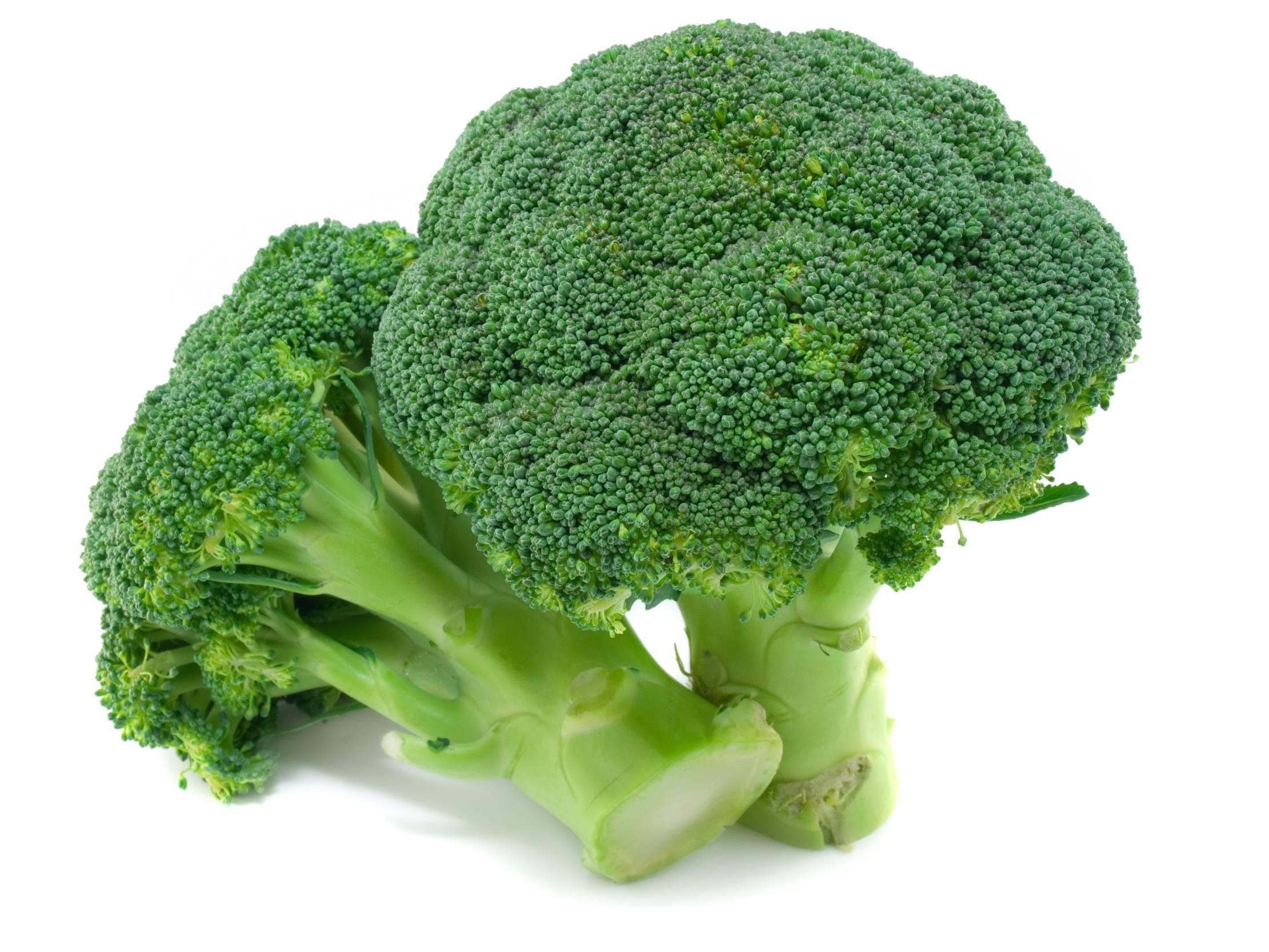 Полезные свойства брокколи и вред брокколи