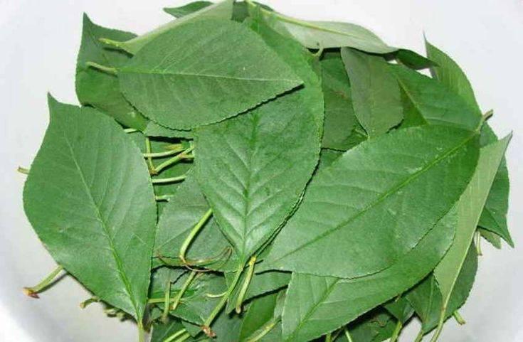 Листья вишни помогут поддержать красоту и здоровье