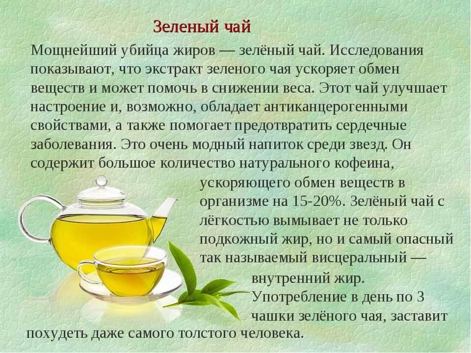 Липовый чай: полезные свойства, противопоказания, польза и вред
