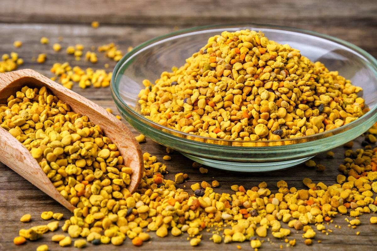 Пыльца пчелиная — полезные свойства