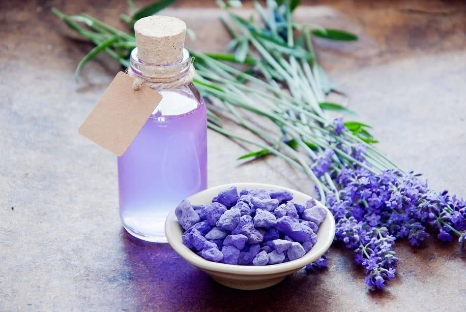 Использование лечебных свойств лаванды