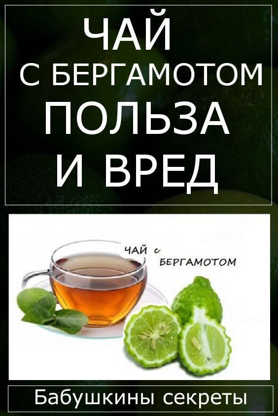 Бергамот: польза и вред для организма, чай и масло