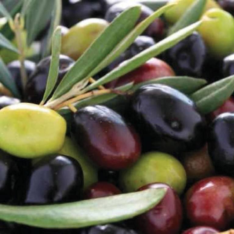 Маслины и оливки: в чем заключается разница