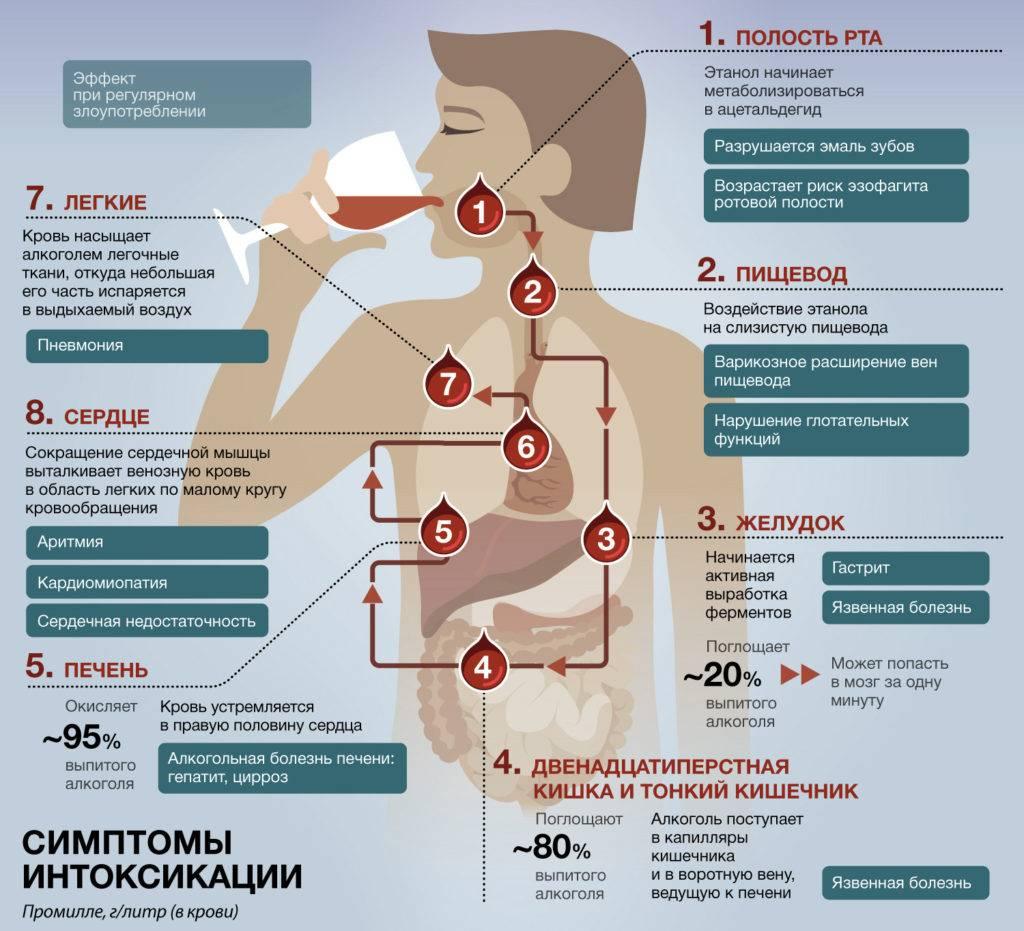 Как влияет водка на организм человека