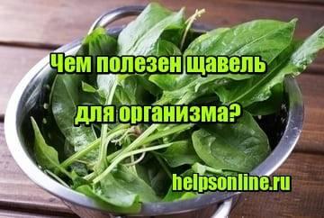 Польза и вред щавели и щевеливой кислоты для здоровья