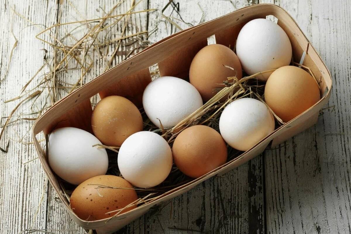 Какие куриные яйца лучше — коричневые или белые?
