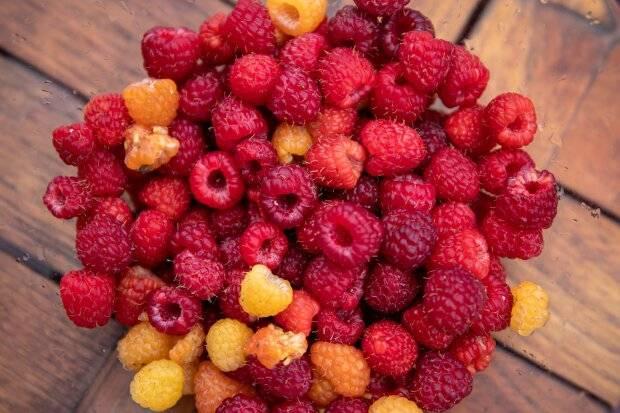 Что любит печень человека из еды — 27 самых полезных продуктов