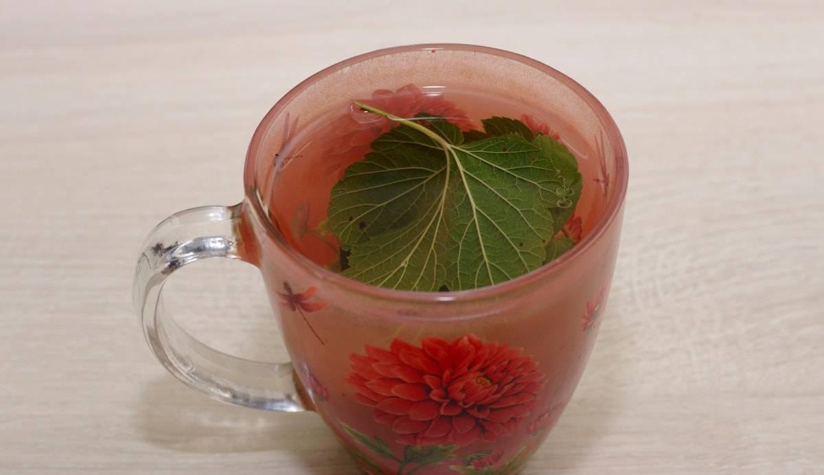 Листья смородины: полезные свойства и противопоказания