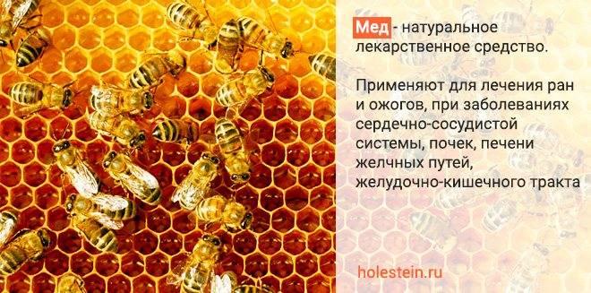Химический состав натурального меда: микроэлементы, витамины, пищевая ценность