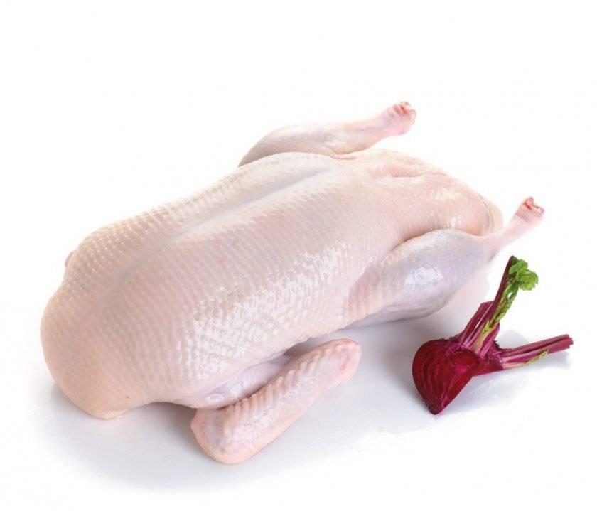 Гусиное мясо: польза и вред, рецепт приготовления