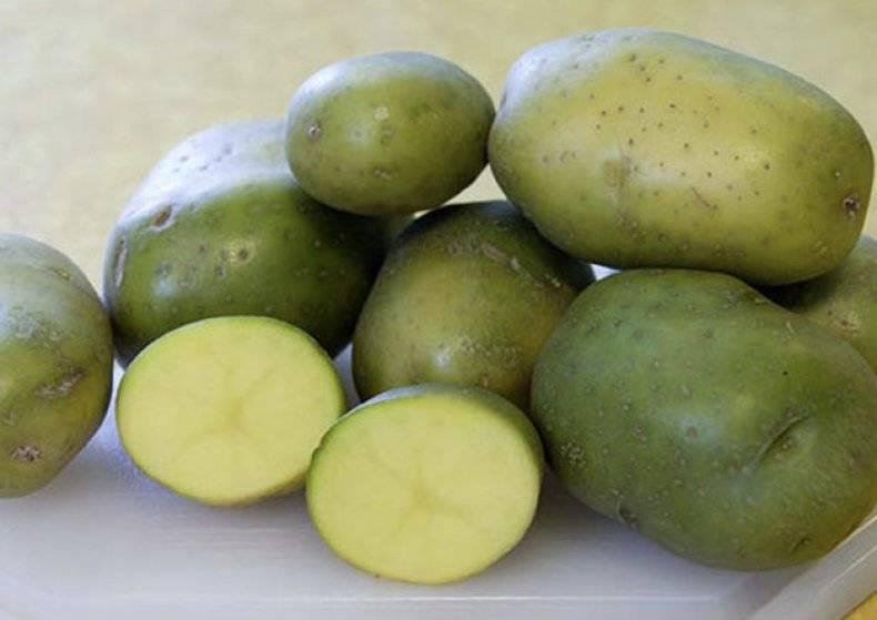 Можно ли есть зеленую картошку или это яд?