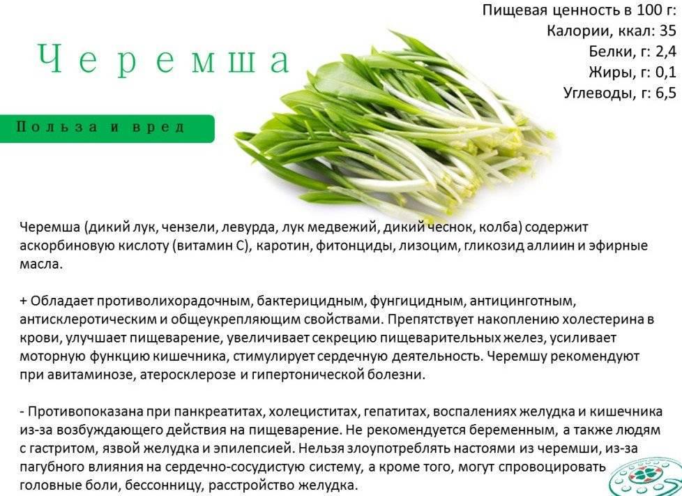Черемша или медвежий лук – кладезь полезных витаминов