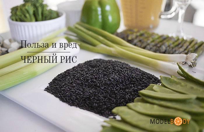 Полезен ли черный и бурый рис: польза и вред для организма