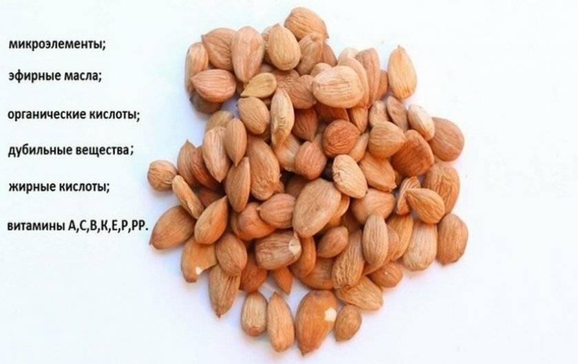Косточки абрикоса: полезные свойства и вред