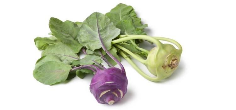 Капуста кольраби: полезные свойства и противопоказания, рецепты