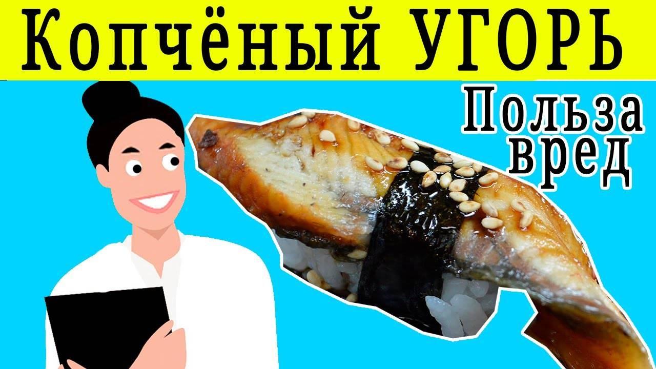 Угорь рыба польза и вред. морской угорь. рецепты копчения угря и его полезные свойства