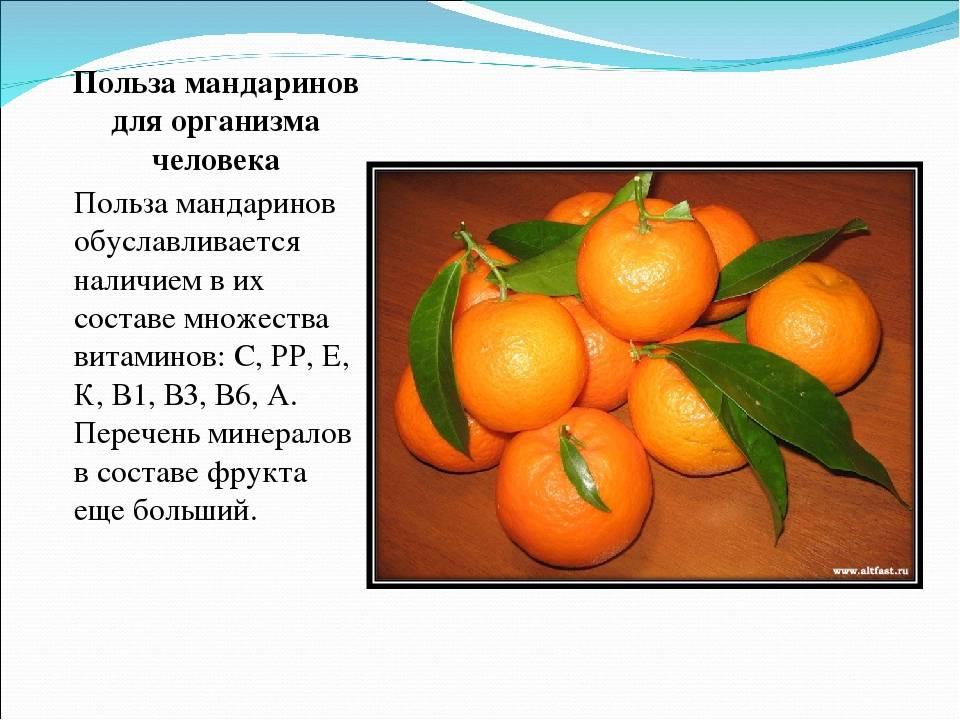 """Мандарины: чем полезны """"новогодние"""" цитрусы и кому их нельзя есть"""