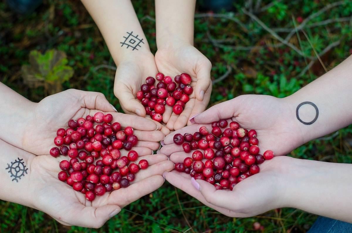 Княженика– лечебная ягода