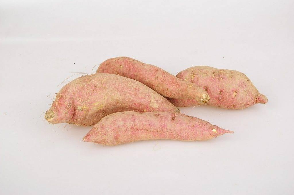 Батат — польза и гастрономические достоинства сладкого картофеля. кому стоит включить его в рацион и какой может быть вред от батата
