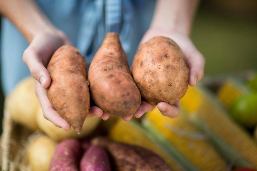 Картошка польза и вред для здоровья человека