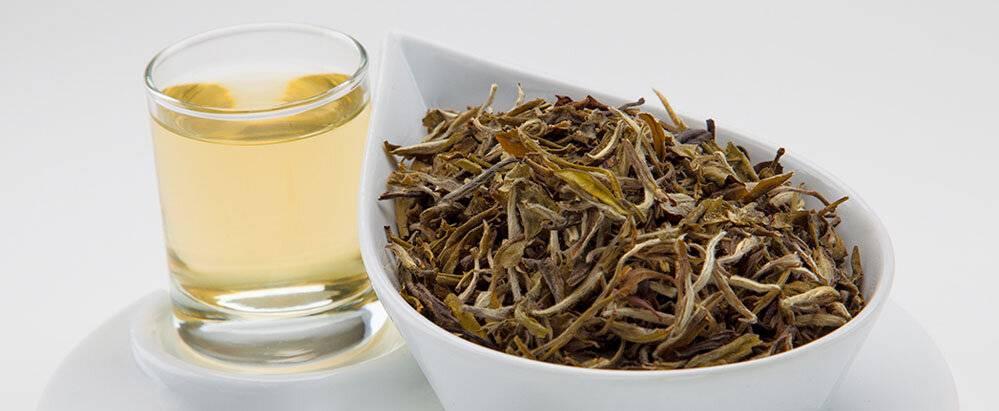 Китайский белый чай, польза и вред