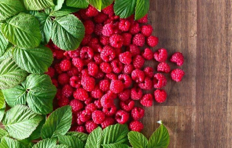 Чем полезен чай из листьев малины — готовим витаминный напиток!