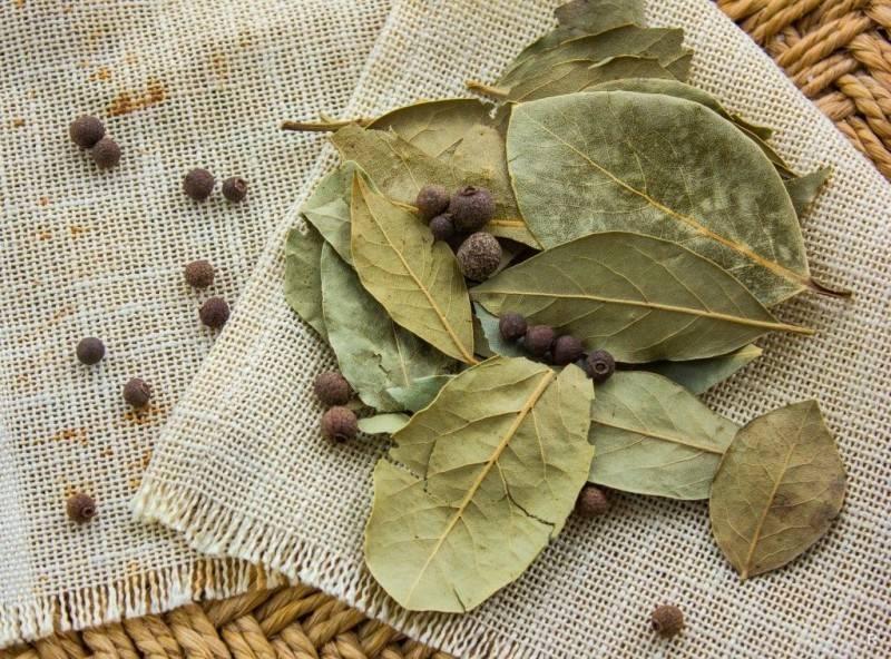 Отвар лаврового листа: польза и вред, при диабете, для месячных, от аллергии