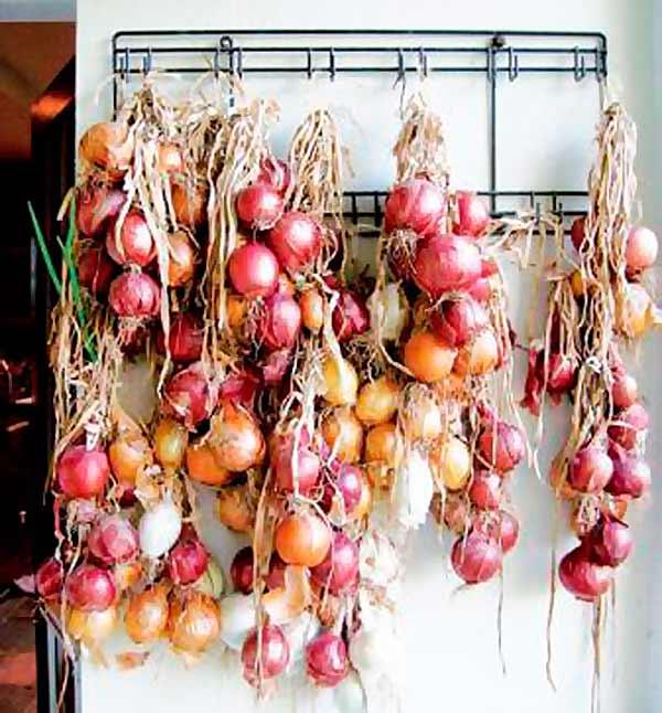 Как хранить зеленый лук долго – способы заготовки на зиму