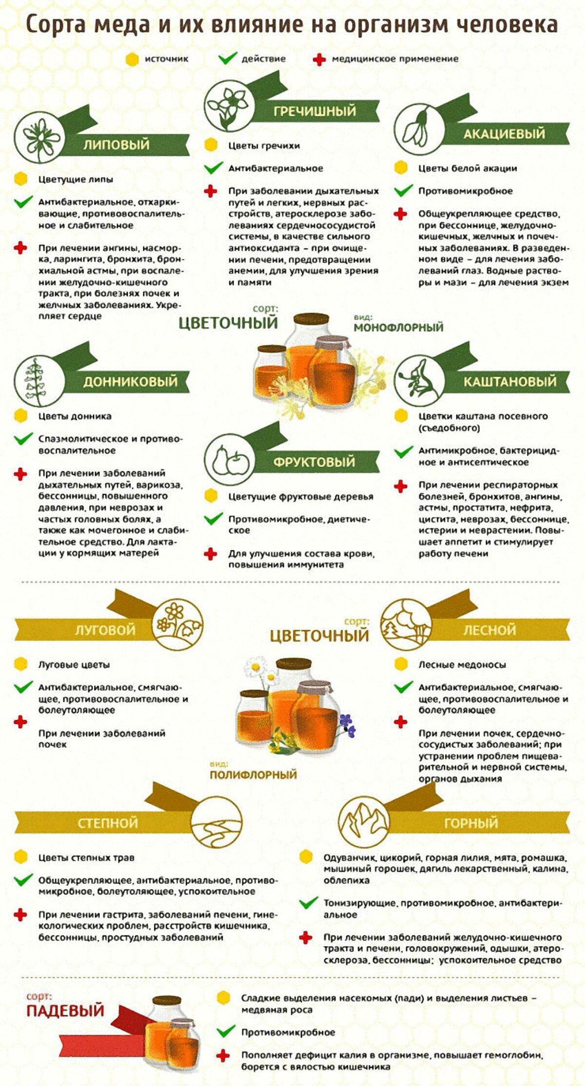 Правда о продуктах пчеловодства: чем полезен мед и в чем его вред?