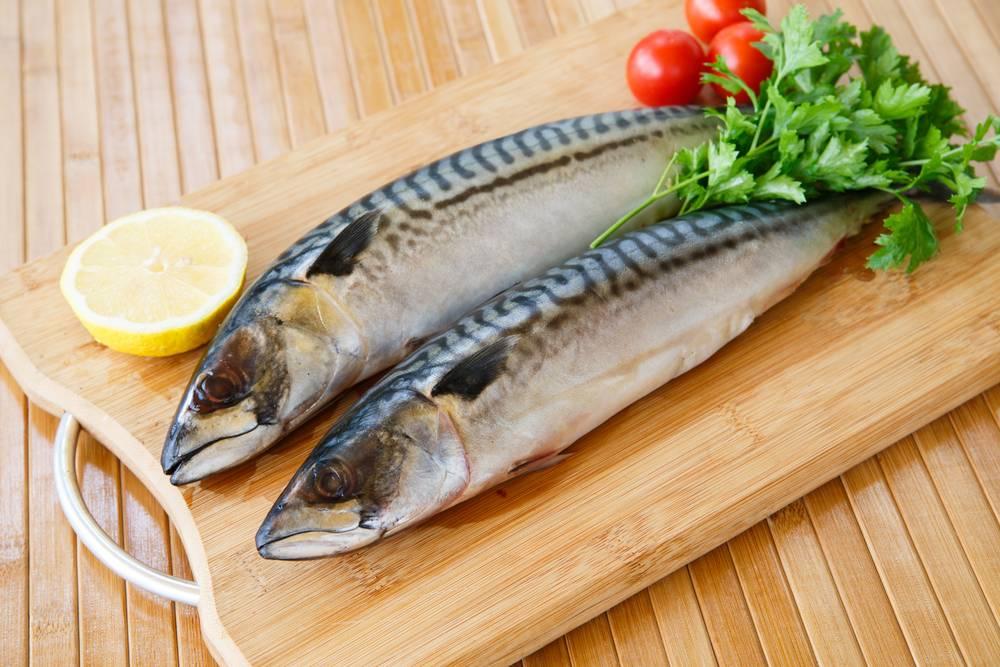 Рыба осетр: разновидности, обитание, ловля и выращивание