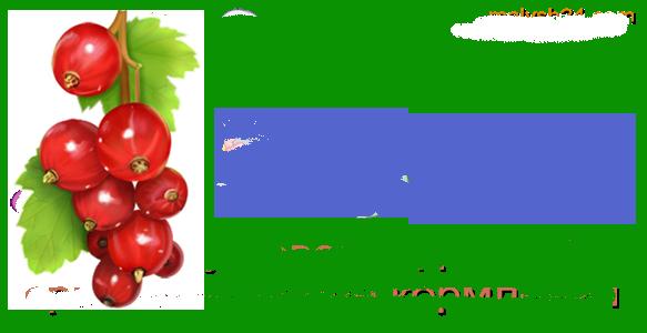 Полезные свойства и вред красной смородины для здоровья женщин и мужчин и противопоказания