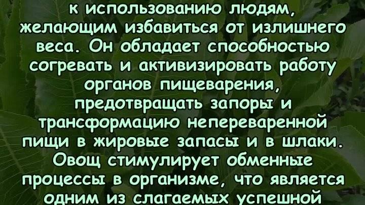 Хреновина русская — жгучая и вкусная… (польза и вред)