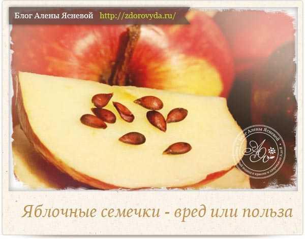 Яблочные косточки польза и вред