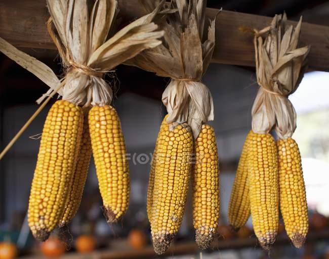 Вареная кукуруза: как лучше всего хранить?