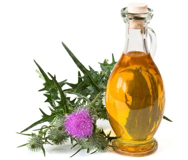 Что полезнее масло или шрот расторопши