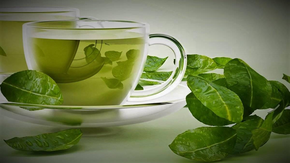 Вред и польза черного и зеленого чая