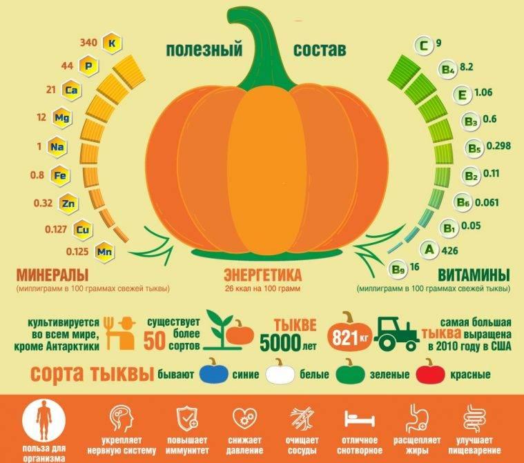 Плод тыква: польза и вред для организма человека, простые рецепты из тыквы