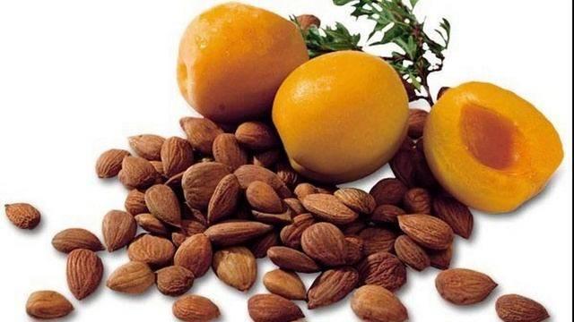 Польза и вред абрикосовых косточек