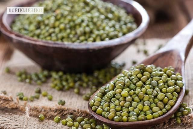 Маш – польза и вред бобового растения