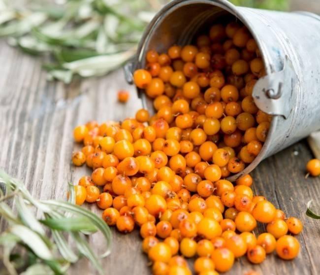 Облепиха: польза и вред ягоды. свойства, рецепты, масло облепихи